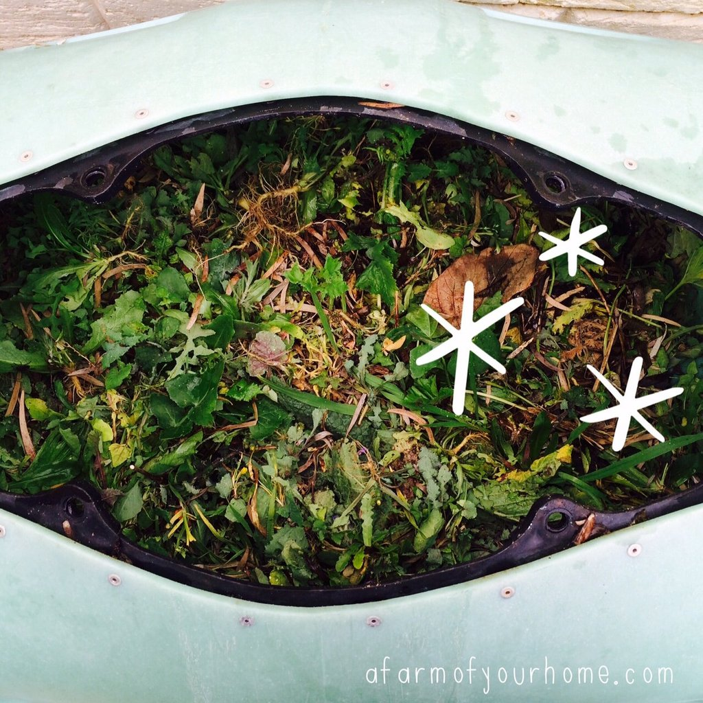 Why I LOVE Weeds_Compost bin_AFOYH_100815