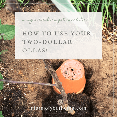 using your two dollar ollas