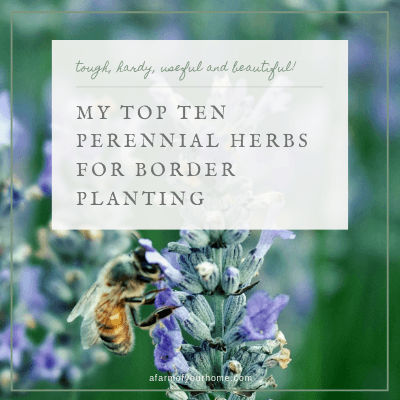 My Top 10 Perennial Herbs for Border Planting.