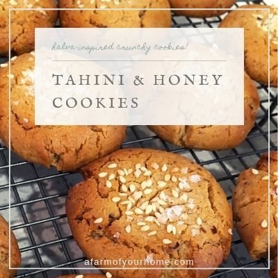 tahini and honey cookies feature posts