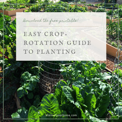 Easy Crop-Rotation Guide to Planting